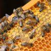 Pagube mari pentru şapte apicultori din Hâncești și Leova